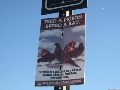 Табличка в парке, призывающая не кормить голубей