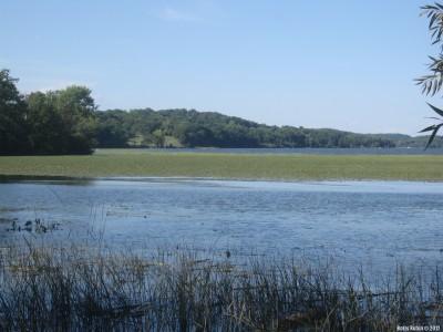 На Гудзоне. Хорошо видны плавающие на воде зеленые заросли чилима