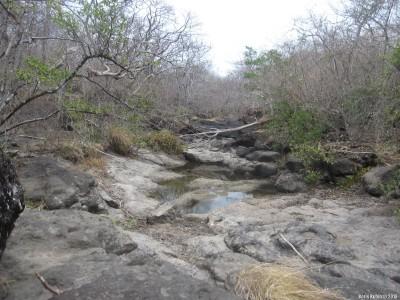 В сухом тропическом лесу