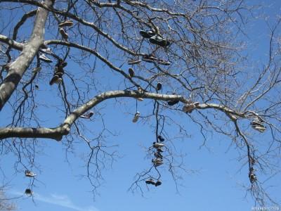 Дерево на углу Gerritsen & Seba Avenues