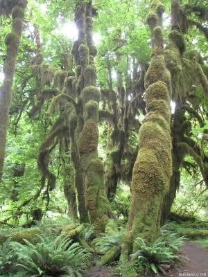 Деревья, покрытые шерстью