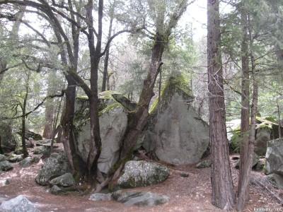 Кусок скалы, застрявший меж деревьев