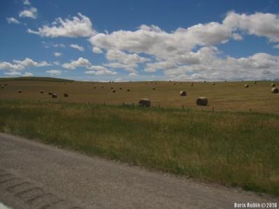 Рулоны прессованной соломы на полях