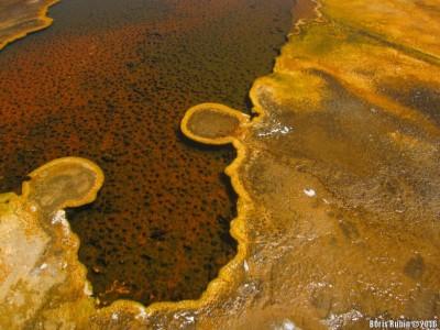Узоры из колоний бактерий