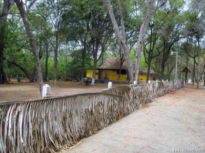 Ограда из пальмовых листьев