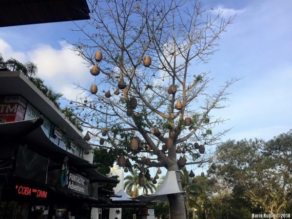 Дерево, украшенное плетеными фонариками