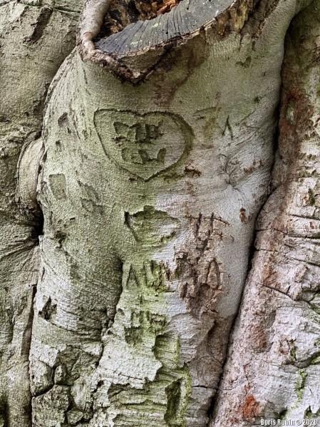 Вырезанное на дереве сердечко