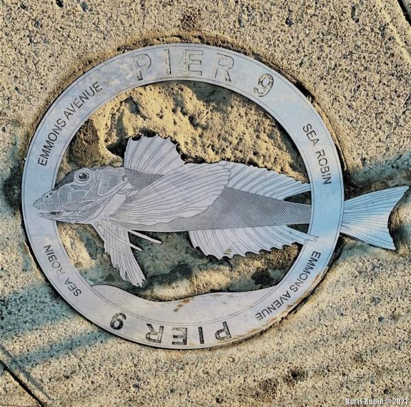 Тригла или морской петух (Sea robin)